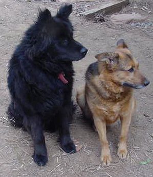 Bear and Toby